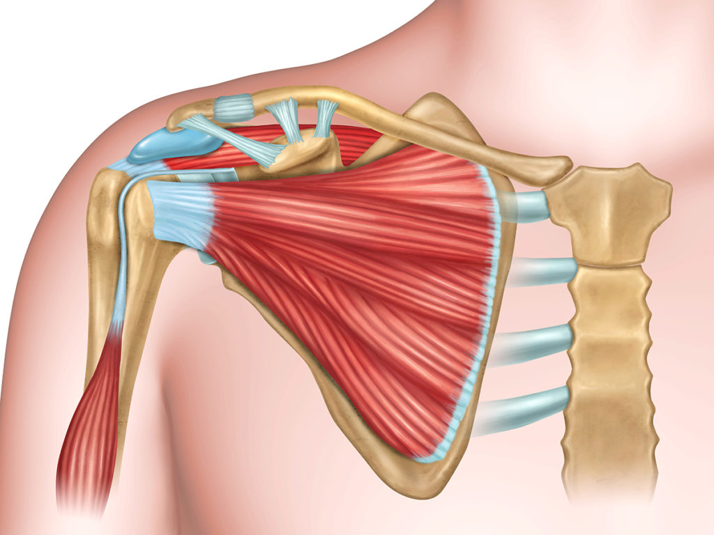 tejidos dolor hombro