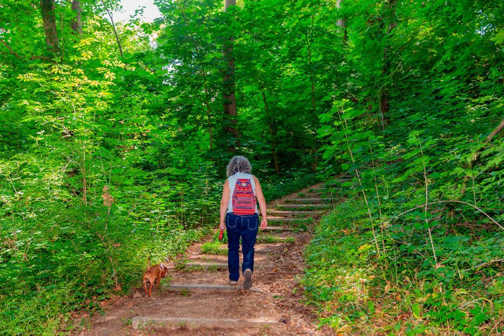 caminar en el bosque